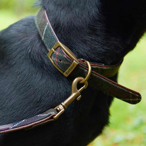 Barbour wool touch tartan collar & lead - modd Black Lab - close up