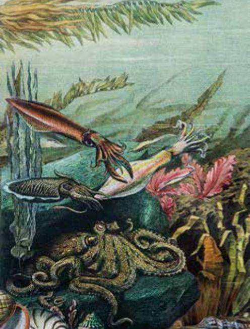 Diana Wilson Shawl - Octopus