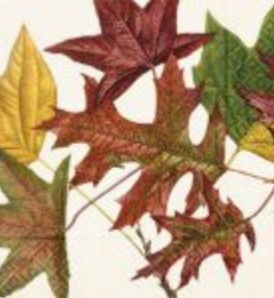 Skona Ting - Autumn Leaves Napkins
